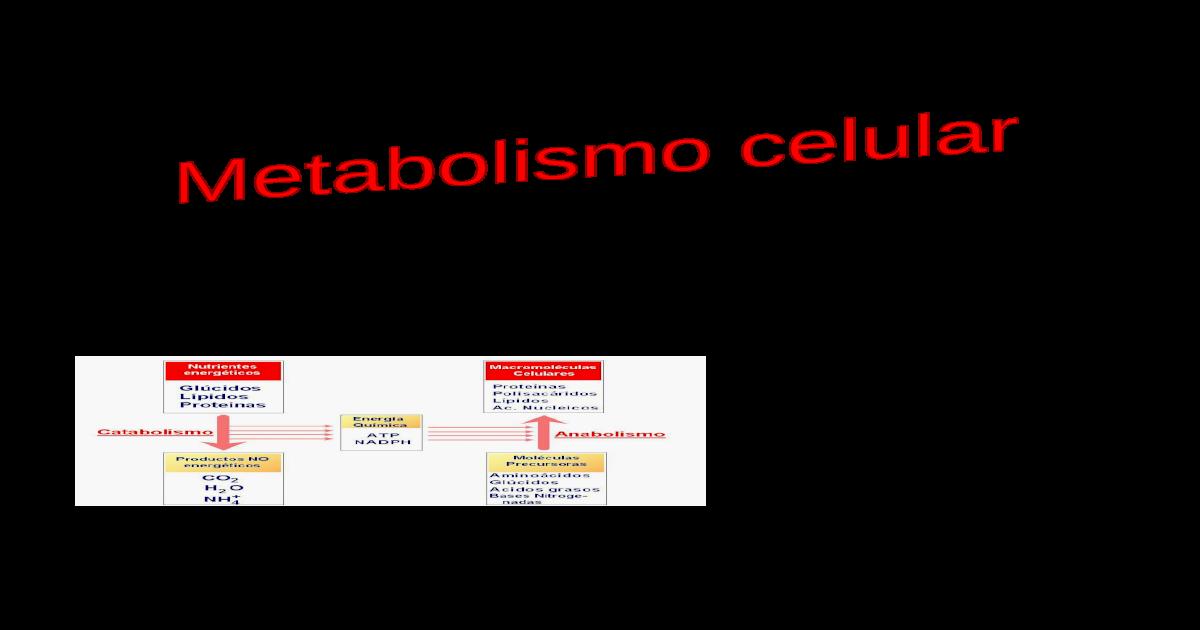 Que es metabolismo Qué error